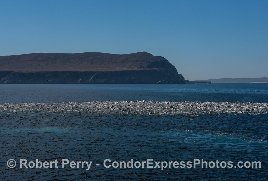 Sea lion aggregation or mob near Santa Cruz Island. (Santa Cruz Island to the left, Santa Rosa Island to the right).