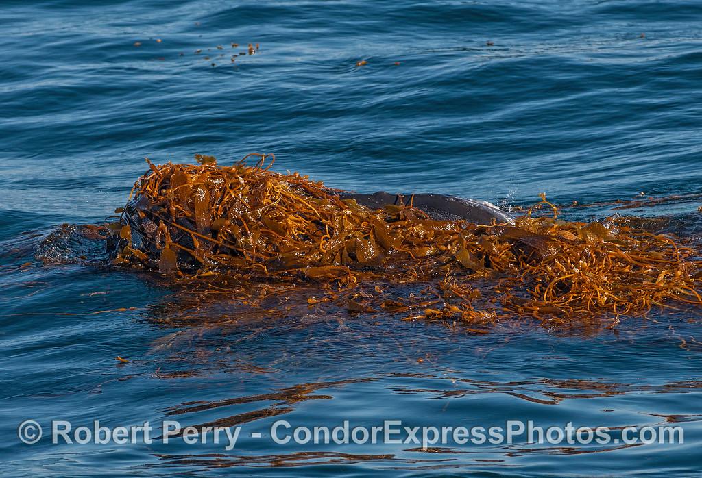 A kelp-headed monster.