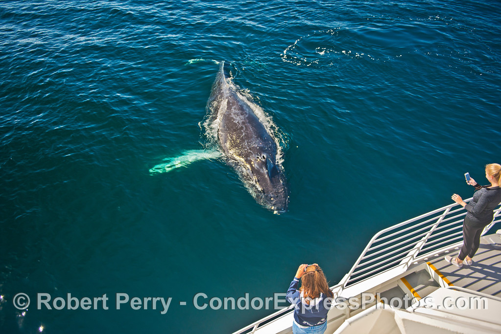 A humpback whale paid a friendly visit to its peeps.