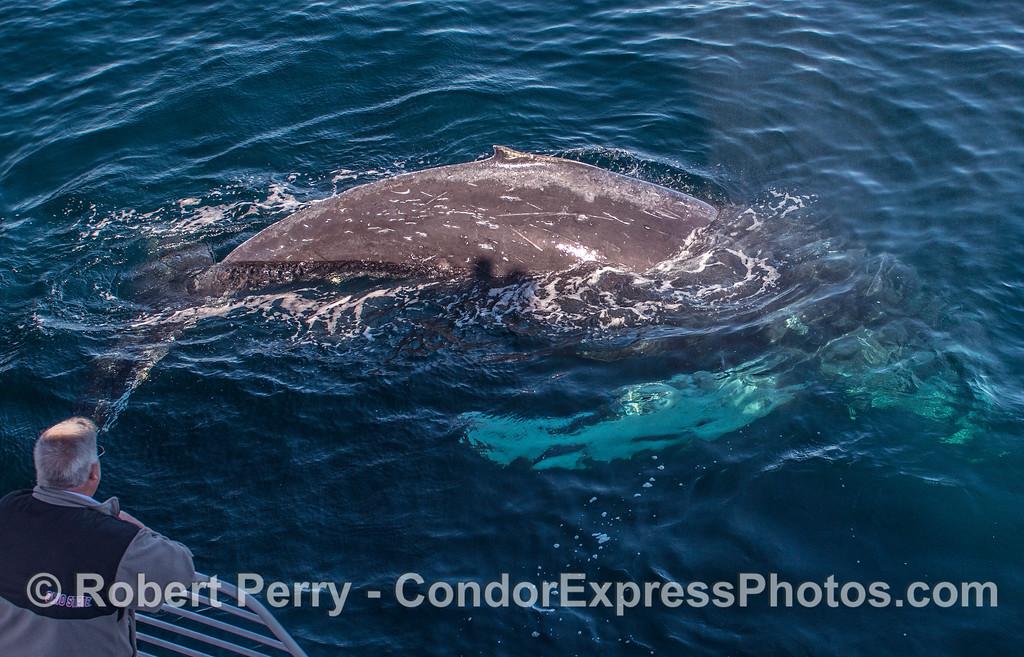 Human-humpback interaction