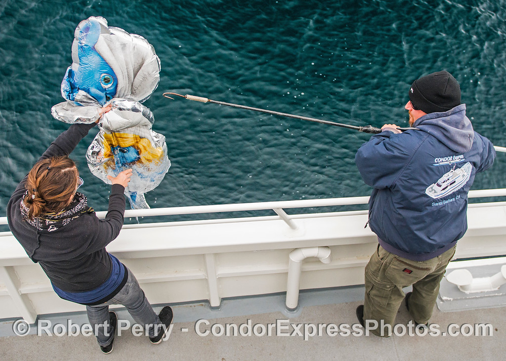 "Retrieval of mylar ""smurf"" balloon pollution."