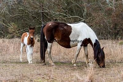 Tunie's 2016 Foal