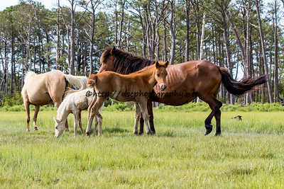 Bay Girl & Colt with Mayli & Filly in the background