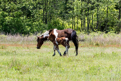 Carol's Little Freedom & Colt