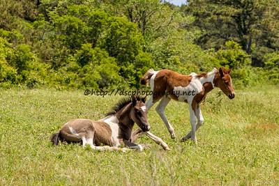 Destiny & Duckie's Foals