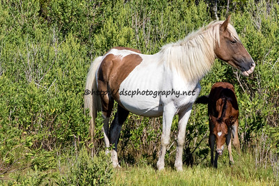 Thetis & Galadriel's Filly