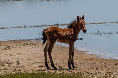 Georgia Peach's Foal