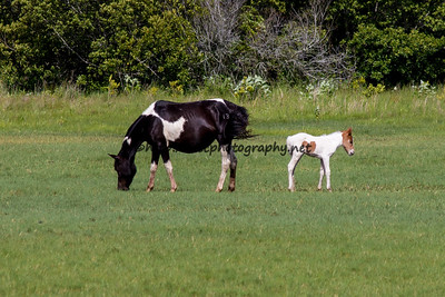 Gracey & Filly