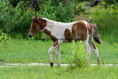 Grandma's Dream's Filly