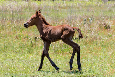 Isle Treasure's Colt