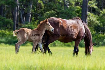 Pappy's Pony's Colt