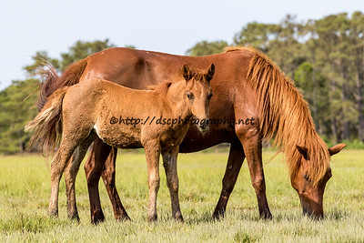 Suzy's Sweetheart & Filly