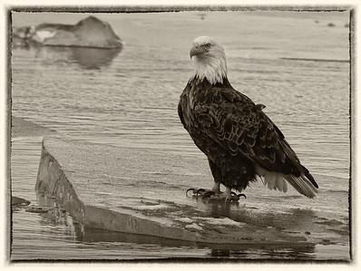 DA061,DB, Eagle on Ice