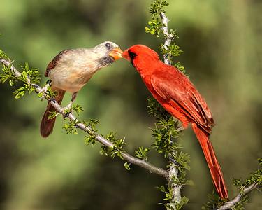 DA058,DN,Love Birds