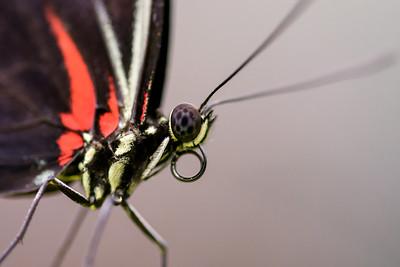 DA094,DN,Butterfly close up
