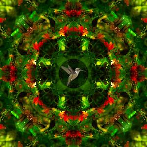 DA047,DC,HummingbirdKaleidoscope