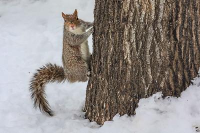 DA040,DN,SquirrelCaughtStaring-213
