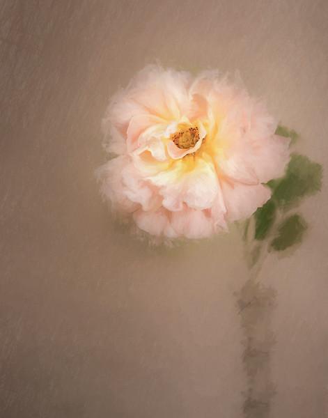 """8-25-16 """"Polka"""" in vase painted"""