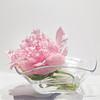 03-17-16 Studio Pink Tree Peony