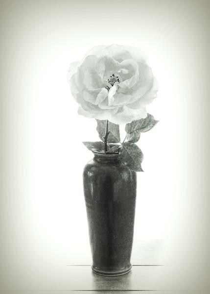 Yellow Rose in Green Vase