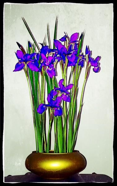 Irises ALA Maplethorpe