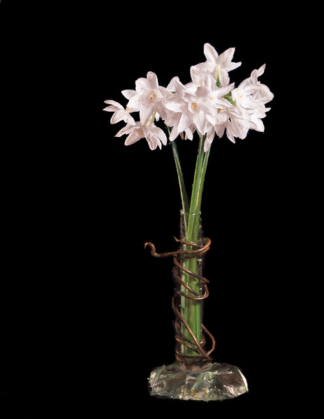 01-16-16 Studio Narcissus