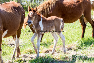 CJ Samm'n's 2016 Filly