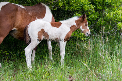 Black Star's Filly