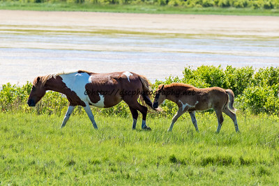 Catwalk Chaos & Filly