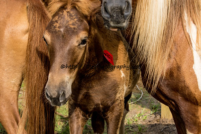 Catwalk Chaos's Filly