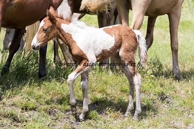 Firestar's 2015 Foal