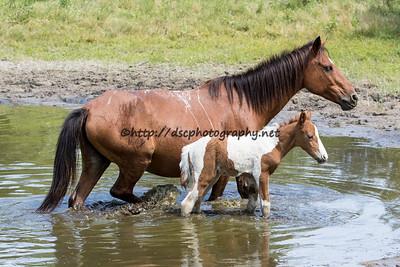 Firestar & 2015 Foal