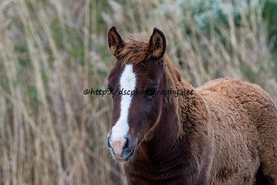 Butterfly Kisses Filly