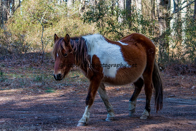 Ella/Ella of Assateague