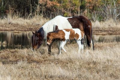 Tunie & her 2016 Foal