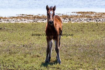 Wildest Dreams' Colt