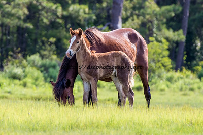 Pappy's Pony & Colt