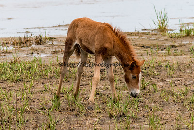 Ella's Filly