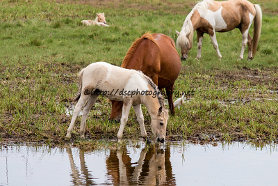 Baybe's Filly with Rainbow Delight's Filly napping in the background
