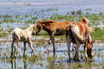 Rainbow Delight's & Catwalk Chaos's Foals