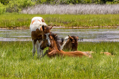 Wild Thing's Foals