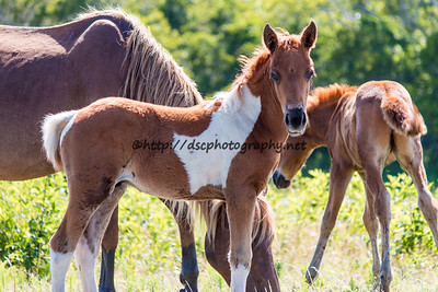 Carol's Little Freedom's Colt
