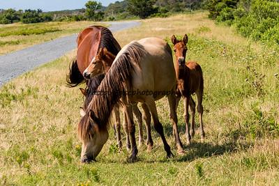Hoppy, Kachina and Foal, and Isle Treasure's Foal