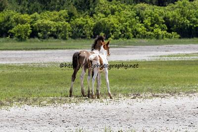 Destiny & Gidget's Foals