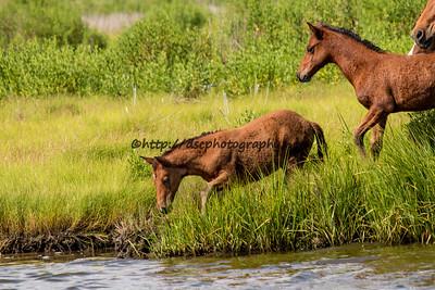 Summer Breeze's & Cody's Foals