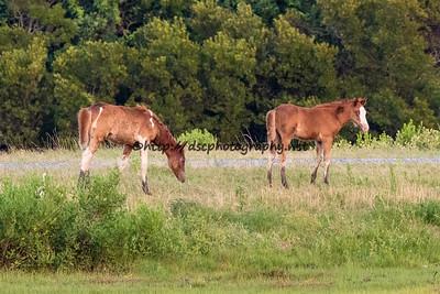 CJ Samm'n's & Kimmee-Sue's Foals