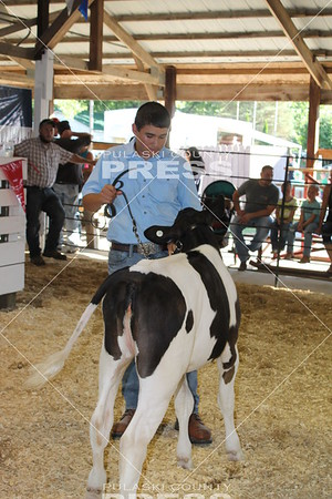 4-H Dairy Heifer Show