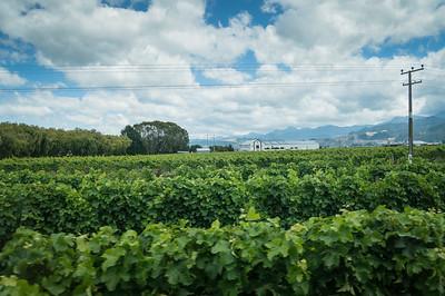 Marlborough Wine Country