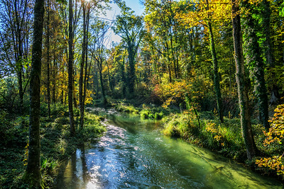 Wald bei Lyss