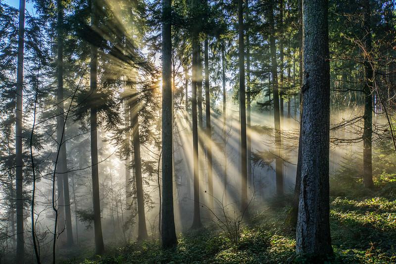 Wald bei Aeugst